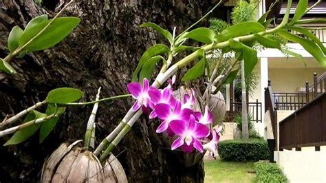 Sabut Kelapa By San House cara merawat anggrek yang tepat bibit