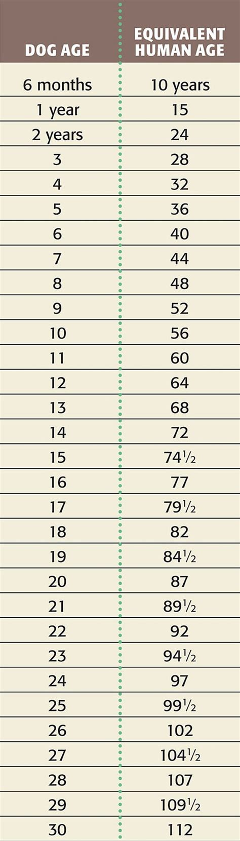 age to human age age vs human age