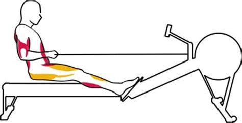 rowing machine diagram muscles used concept2