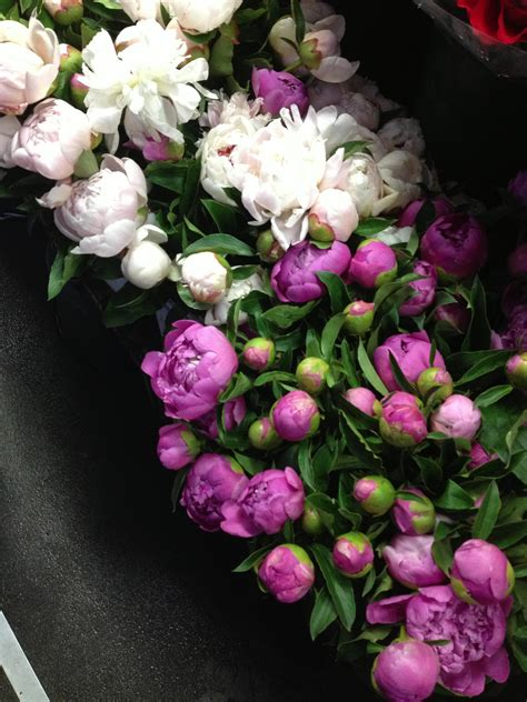 peonies season peony season flower arrangements pinterest