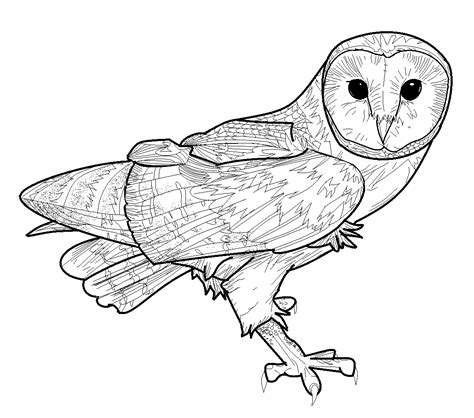 barn owl coloring pages coloring pages pictures