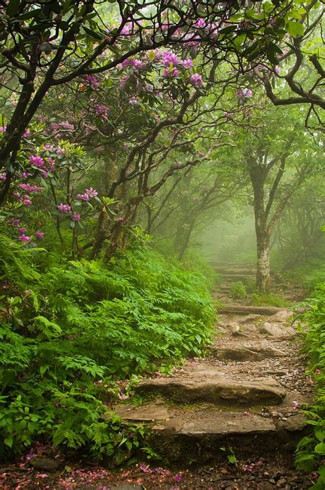 Garden Ridge Carolina Craggy Steps Print By Joye Ardyn Durham
