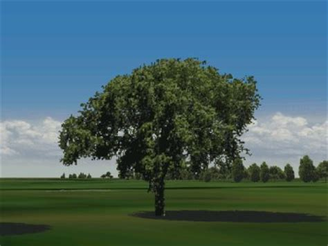 elm tree symbolism myth sinesyensya and the bamboo tree healingeye