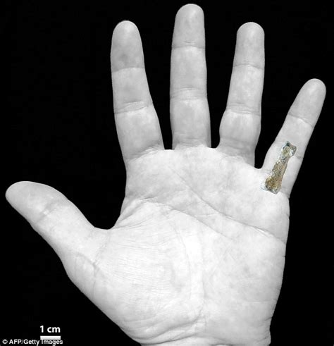 Kaso 3d Evolion 1 85m year finger bone that could rewrite human