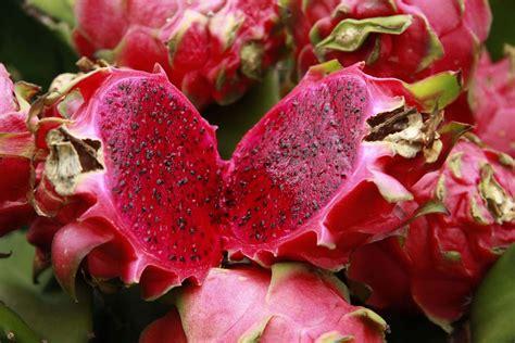 Sale Buah Naga Merah manfaat khasiat buah naga merah dan putih untuk kesehatan