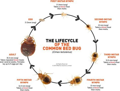 how to tell you have bed bugs bed bug infestation positivemed