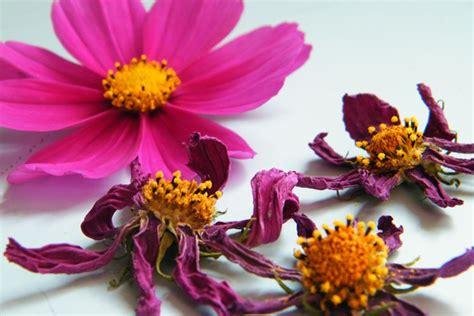 fiori essiccati vendita fiori secchi vendita fiori secchi vendita di fiori secchi