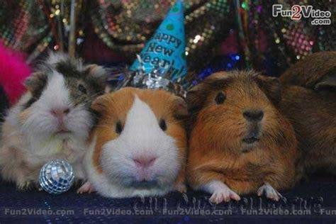 new year animal birthday and animals animals birthday