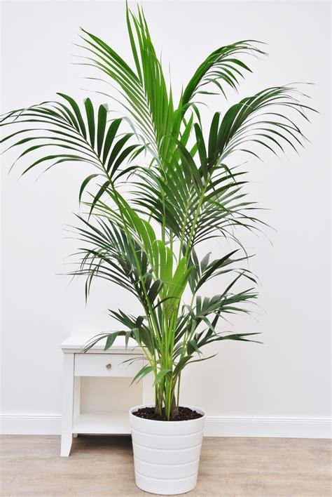Palmen Im Garten Pflanzen 3151 by Palmen Im Garten Pflanzen Winterharte Palmen Im Garten