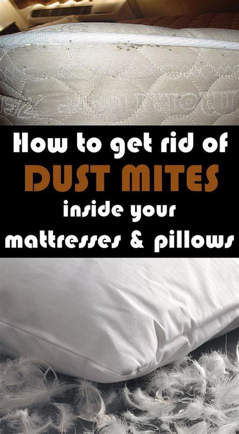 How Do You Get Rid Of Mattresses by Mattress Dust Mites And How To Get Rid On