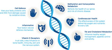 Gene Snp Detox Test by Fitgenes Dna Testing Nutrisearch New Zealand Australia