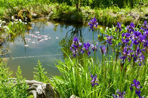 Garten Teich Pflanzen by Gartenteich Pflanzen 187 Sorten Pflege Und Standort