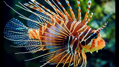pictures of colorful fish top 10 most beautiful and colourful fish