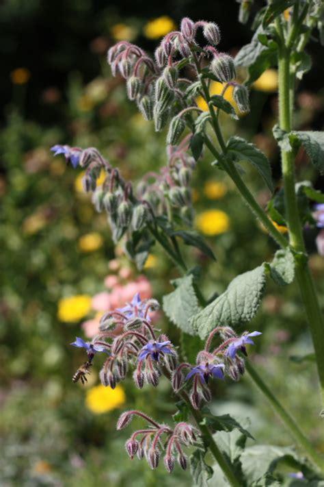 Garten Pflanzen Im August by 12 12 Im August Garten Und Pflanzen Kompromisslos