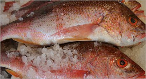 Fresh Fish House Detroit Mi by Snapper Freshfishhouse Fresh Fish House
