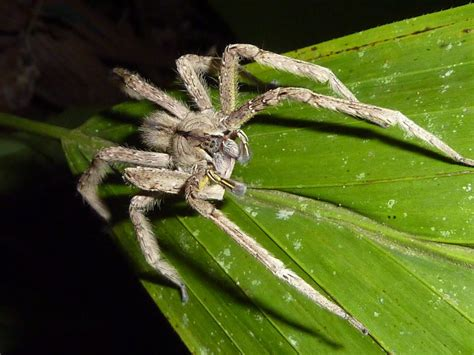 Brazília Costa Rica 10 Most Poisonous Animal On Earth That You Need To