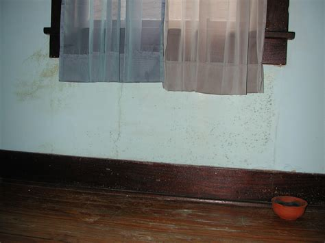 how to prevent mold in house how to prevent mold from growing in your house