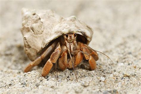 Bathroom Staging Ideas by Molting Hermit Crabs Advice On Care
