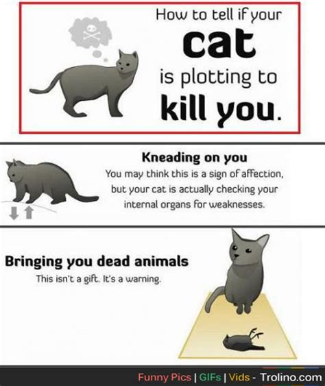 how to tell if your is in how to tell if your cat is plotting to kill you trolino