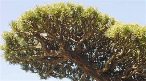 japanische designer möbel asiatische garten gestalten bonsai baum