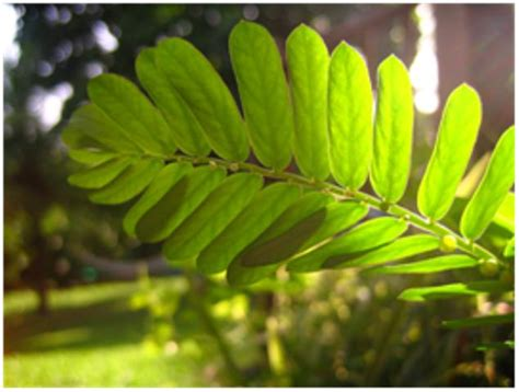 Plante Terre Acide by Plante Acide G Rgulateur De Croissance Des Plantes Acide