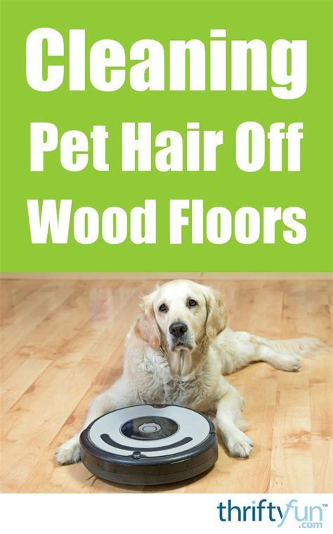 Cleaning Pet Hair Off Wood Floors   ThriftyFun