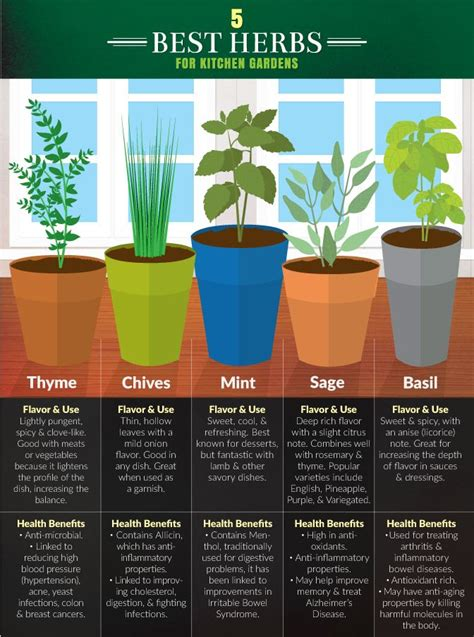 grow herbs in kitchen best 25 kitchen herb gardens ideas on pinterest