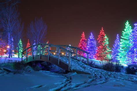 light show christmas lights winter spruce lights winter flickr