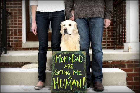 baby announcements with dogs baby announcement ideas announcements