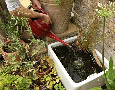 how to catch a frog in your backyard 25 best ideas about small garden ponds on