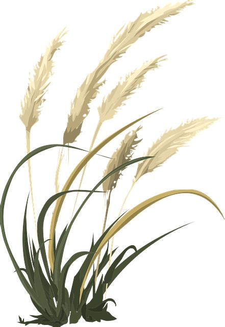 wheat grass agriculture  vector graphic  pixabay