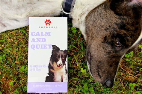 calming dogs during fireworks how to keep your calm during fireworks miss frugal