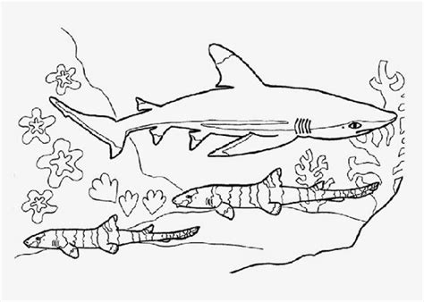 san jose sharks coloring page free shark coloring printables colorings net