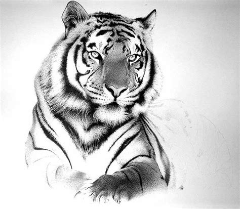 bengal tiger tattoo designs black and grey bengal tiger design