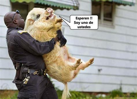 chistes bromas imágenes graciosas y mucho más imagenes graciosas imagenes chistosas para descargar con