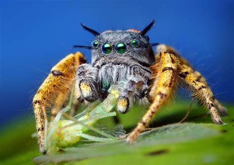 Cute Spiders Phil Ebersole S - tom clark philip larkin administration