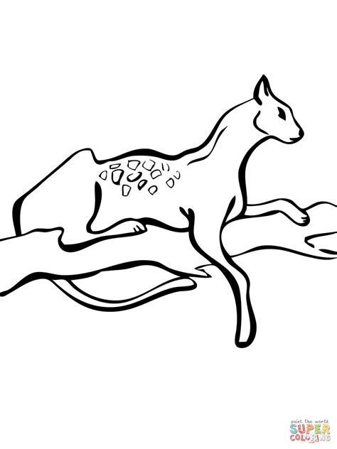 jaguarundi coloring page image gallery how to draw jaguarundi