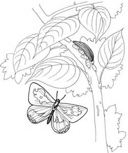 Caterpillar And Butterfly 2 Coloring Page Supercoloring Com | caterpillar and butterfly 2 coloring page supercoloring com