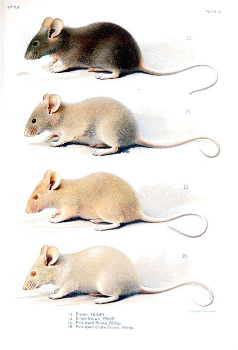 mouse colors 39 best blinding me with science images on