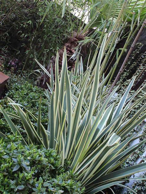 progetto piccolo giardino best progetto piccolo giardino with progetto piccolo giardino