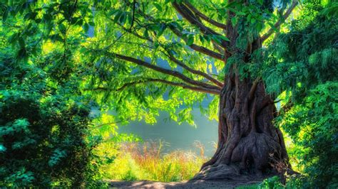 beautiful nature images the beautiful green nature high definition wallpapers