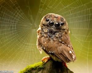 spider owl by it s web pictures
