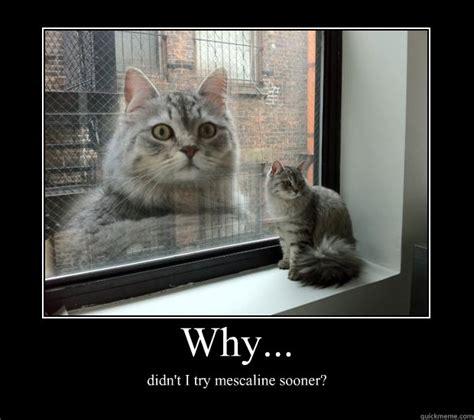 Lol Cat Meme - lolcat taxonomy jpg memes