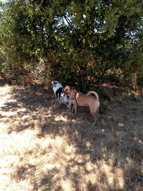 out on a leash how terryã s gave me new books sabrielle melton s