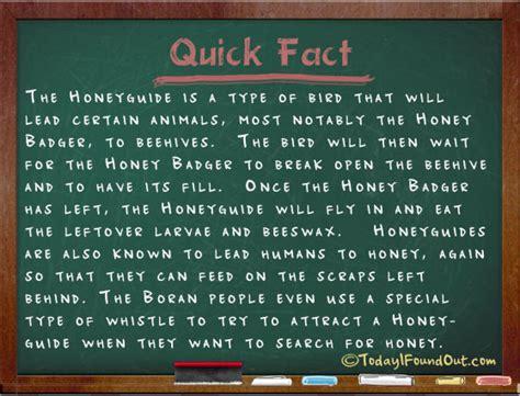 type  bird   purposefully lead people   animals  beehives