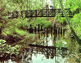 Francis Marion National Forest Cabins by Francis Marion National Forest Hiking Away Hit