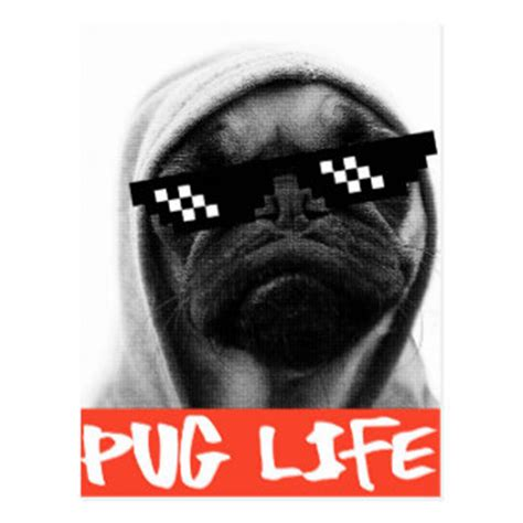 pug thug thug for postcards zazzle