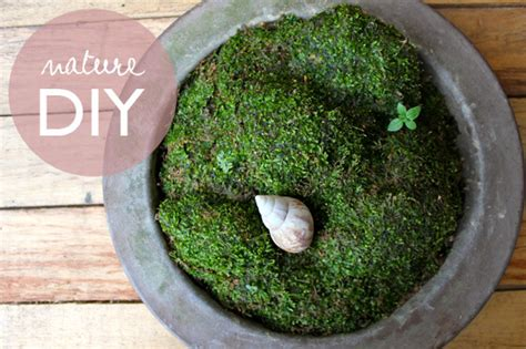 make your own moss garden little green dot