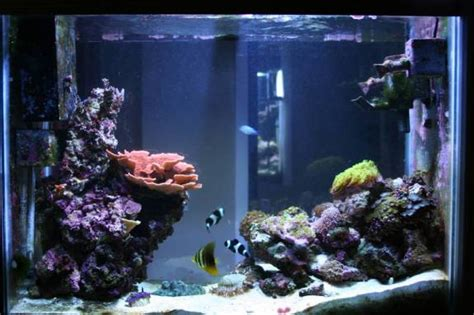 aquascaping tips aquascaping tips general discussion nano reef com forums