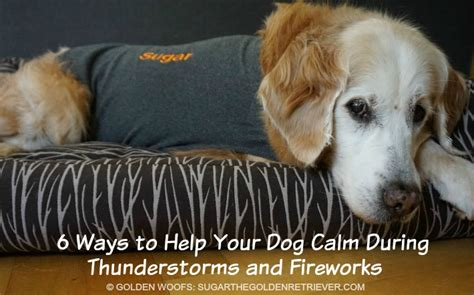 how to calm a during fireworks how to keep your calm during thunderstorms and fireworks golden woofs